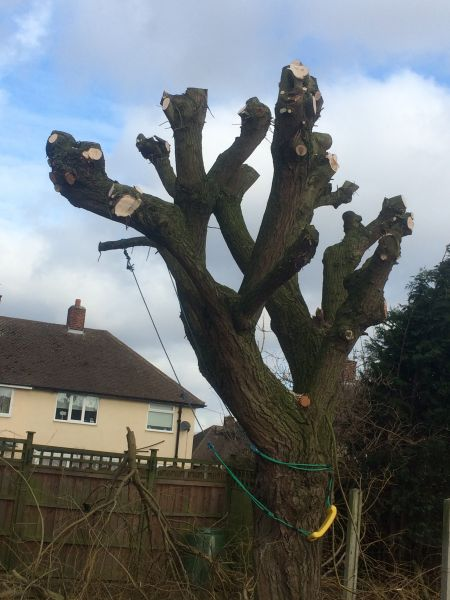 Tree pruning Nottingham: Swipe To View More Images
