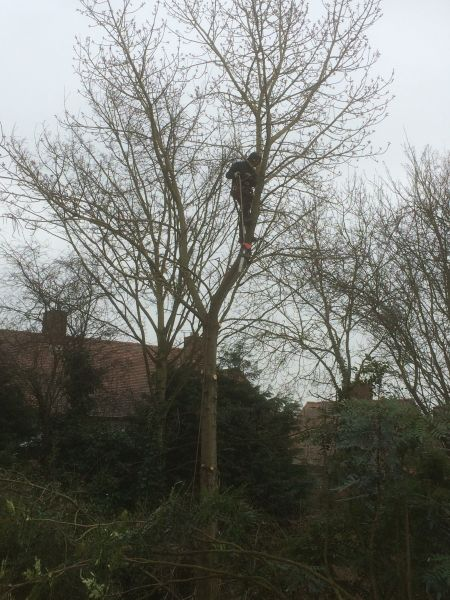 Tree Felling Nottingham: Swipe To View More Images