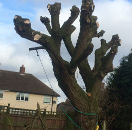 Tree pruning Nottingham: Click Here To View Larger Image