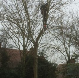 Tree Felling Nottingham: Click Here To View Larger Image